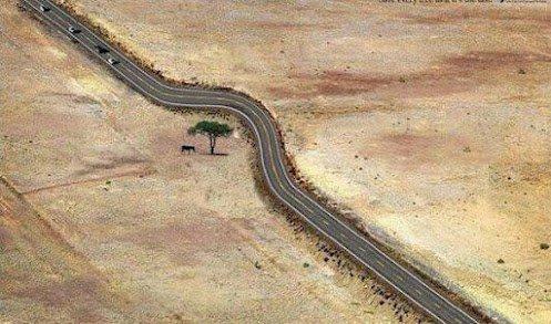 Doğa sevgisi
