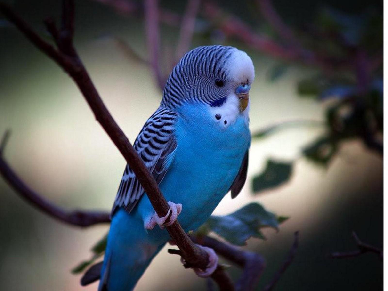 Rüyada muhabbet kuşlar görmek yakalamak ne demek