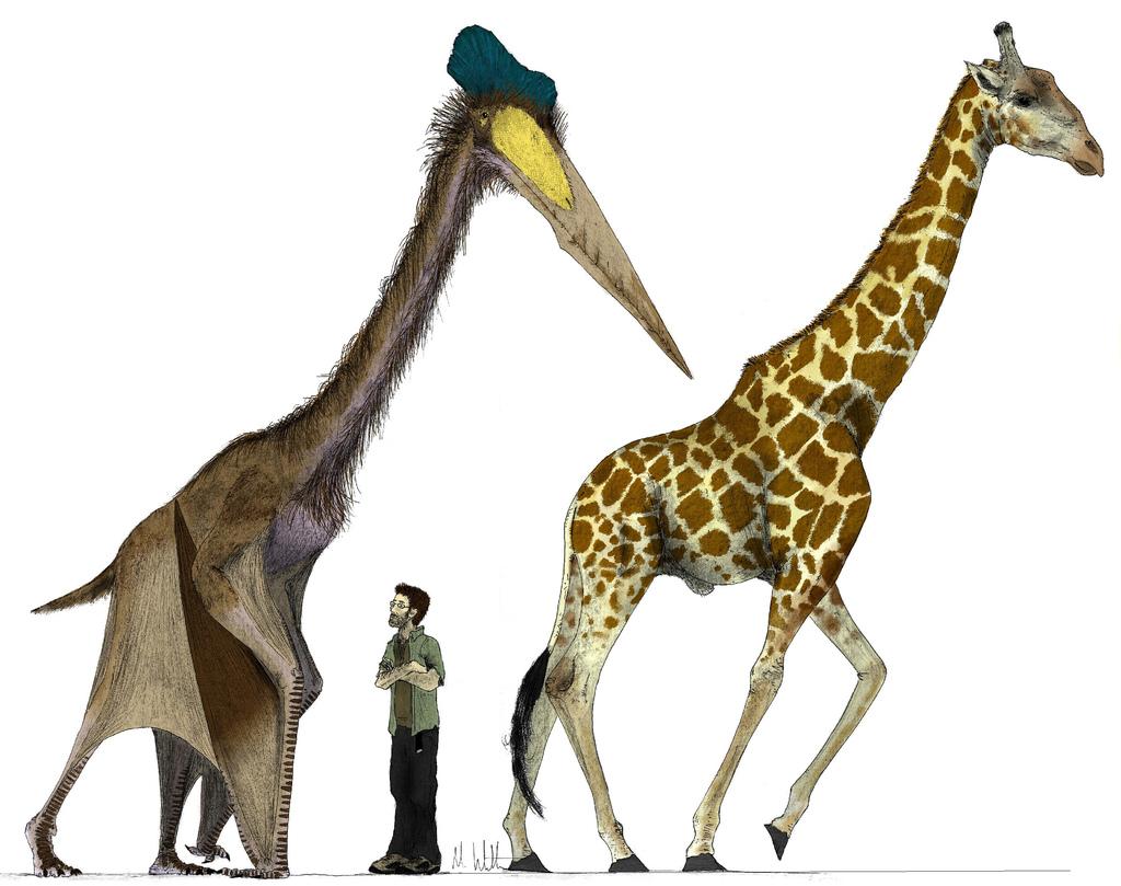 quwrzalcoaitus dünyanın en büyük uçan hayvanının resmi