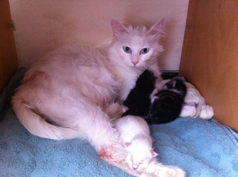 kedi doğurtmak