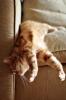 bir kedinin yapabileceği en büyük şerefsizlik