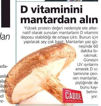 D Vitamini Sayfa 2 Uludag Sozluk